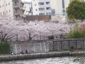 満開の桜風景